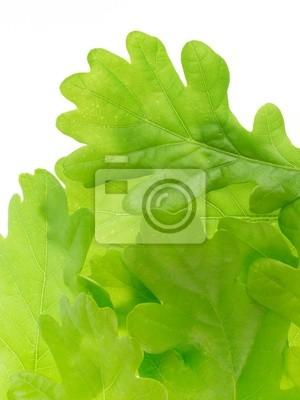 oak leaves detail