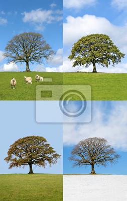 Oak Tree in Four Seasons
