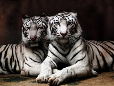 Wall mural Oil painting White Tiger / photo effect  Oil painting