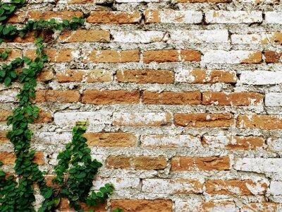 Wall mural Old brick wall with creeper