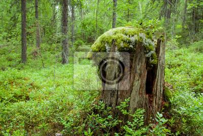 old tree stump