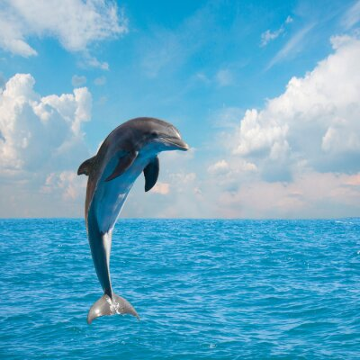 Wall mural one jumping dolphins