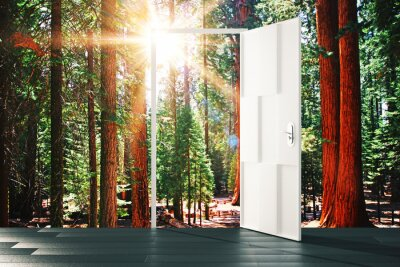 Wall mural Open door to the sunny forest concept
