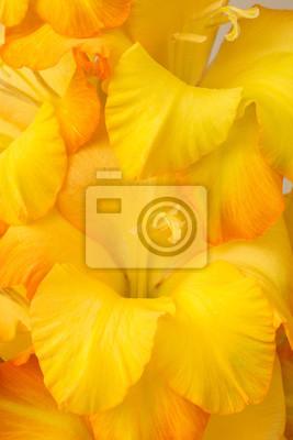 orange blossom irises