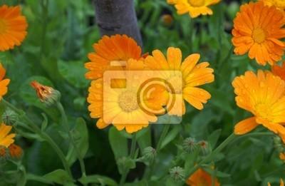 orange flower-bed