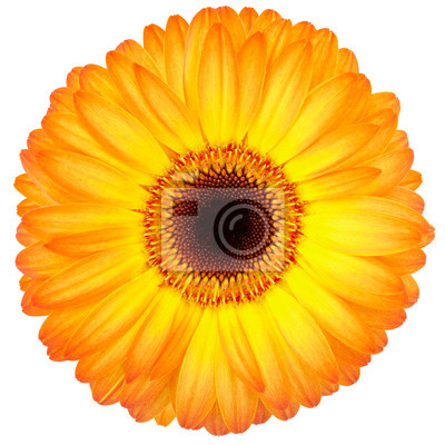 Wall mural Orange flower with clipping path