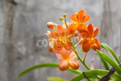 Wall mural Orange orchid flowers