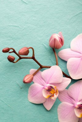 Wall mural Orchid.