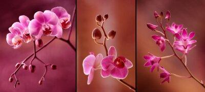 Wall mural Orchidea tryptyk w fioletach