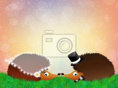 pair of hedgehogs