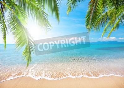 Wall mural Palm and tropical beach