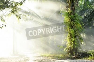 Wall mural Palm Fog Light Farm Day Outdoor