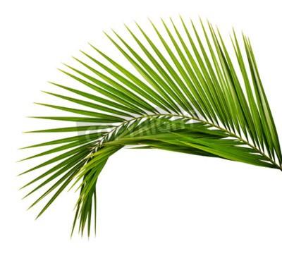 Wall mural Palm leaf