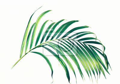 Wall mural Palm leaves on white background.