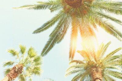 Wall mural palm tree and sunshine