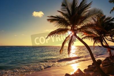 Wall mural Palm tree on the tropical beach, sunrise shot