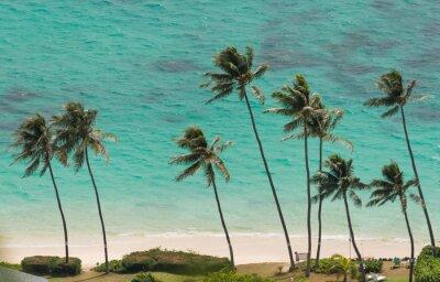 Wall mural Palm Trees at the Beach of Waimanalo, Hawaii
