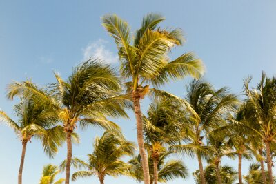 Wall mural palm trees on the background of a beautiful sunlight