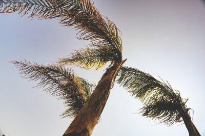Wall mural palms