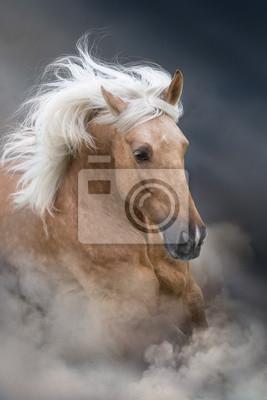 Palomino horse with long mane portrait in motion  on desert sandy dust