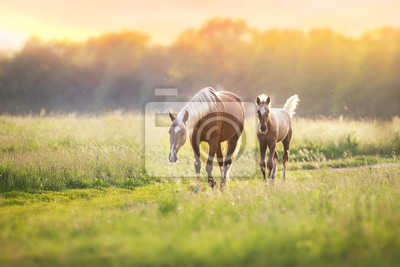 Wall mural Palomino horses on spring pasture
