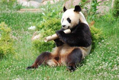 Wall mural Panda 1