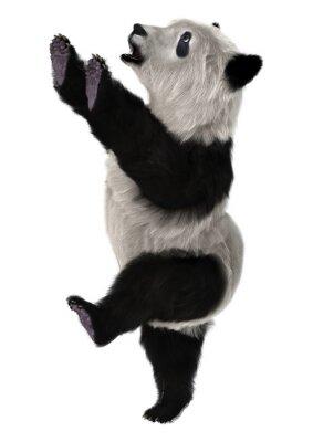 Wall mural Panda Bear Cub