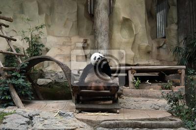 Wall mural panda bear eating carrot