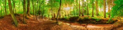 Wall mural Panorama of an idyllic forest with brook at sunrise