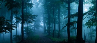Wall mural Panorama of foggy forest. Fairy tale spooky looking woods in a misty day. Cold foggy morning in horror forest