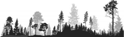 Wall mural panorama of high grey fir trees forest on white
