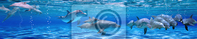 Wall mural Panorama of Underwater life. Dolphins