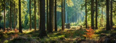 Wall mural Panoramic Sunny Forest in Autumn