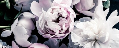 Wall mural Pastel peony flowers as floral art background, botanical flatlay and luxury branding design
