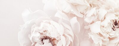 Wall mural Pastel peony flowers in bloom as floral art background, wedding decor and luxury branding design