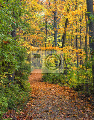 Wall mural Path in Autumn Woods