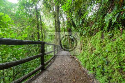 Path in lush rainy rainforest