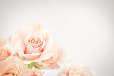 Wall mural Peach rose cluster  with vignette