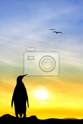 Penuin at sunset
