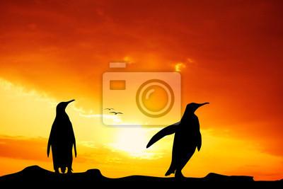 Penuins at sunset