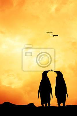 Penuins in love at sunset
