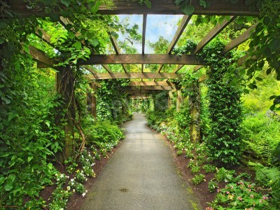 Wall mural Pergola passage in the garden, surrounded by wisteria and climbing plants