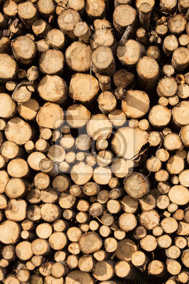 Pile of chopped wood