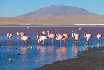 Wall mural Pink flamingos at