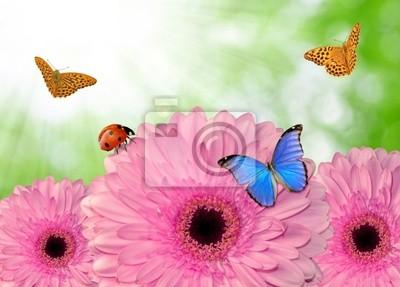 pink gerberas with butterflies