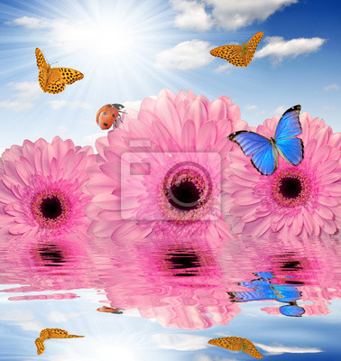 pink gerberas with butterfly