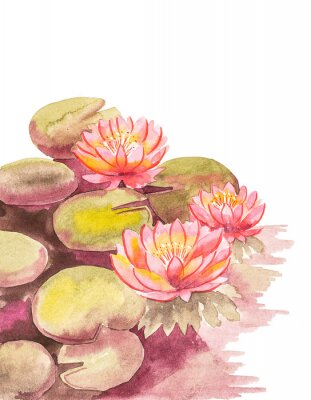 Wall mural Pink lotuses with brown-green leaves, top right blank background for an inscription, watercolor handwork.