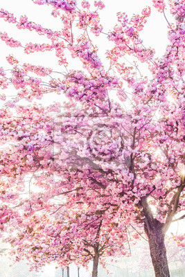 Wall mural pink trees