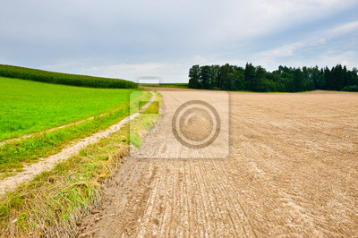 Wall mural Plowed Field