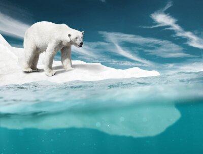 Wall mural Polar Bear